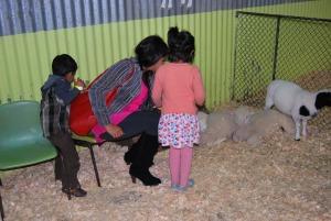 Chesterfield Farm Baby Animals