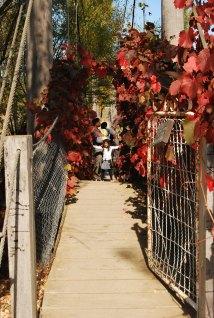 Hanging Bridge at Lavandula Daylesord Victoria Australia