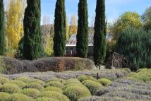 Lavender fields in Autumn Lavandula Daylesord Victoria Australia